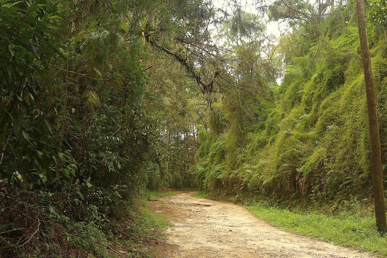 Trilha do Parque Nacional da Serra da Bocaina
