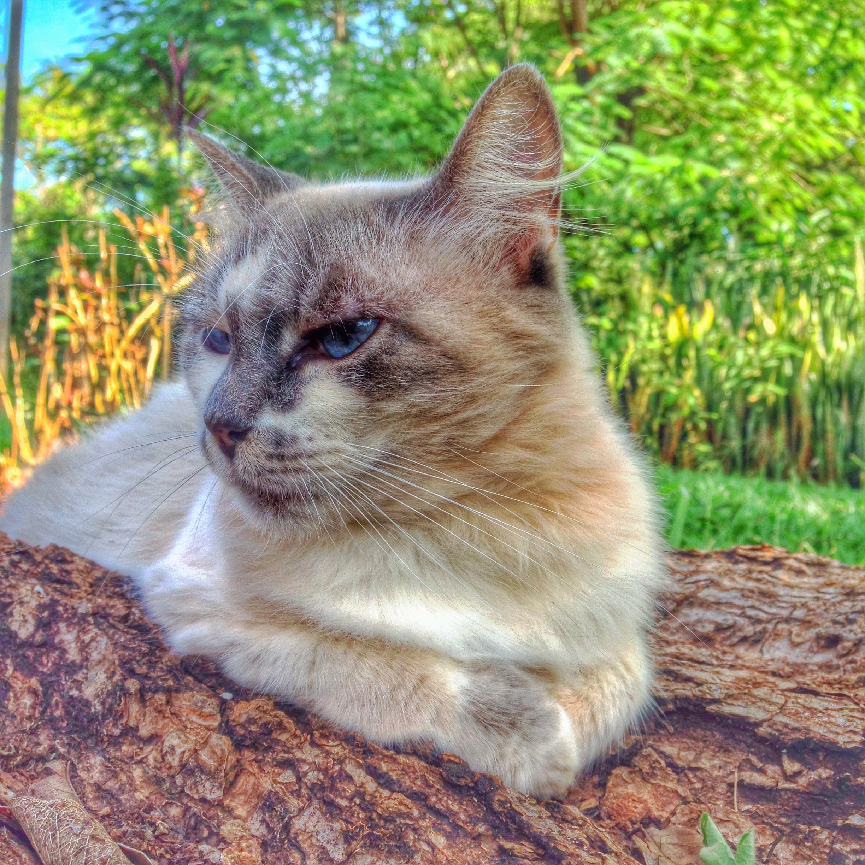 Gato em Brumadinho